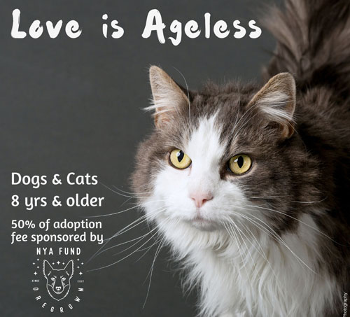 Adopt-a-Senior Pet Month